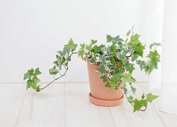mood boosting houseplants 4 - Van deze 5 kamerplanten is wetenschappelijk bewezen dat ze je beter laten voelen