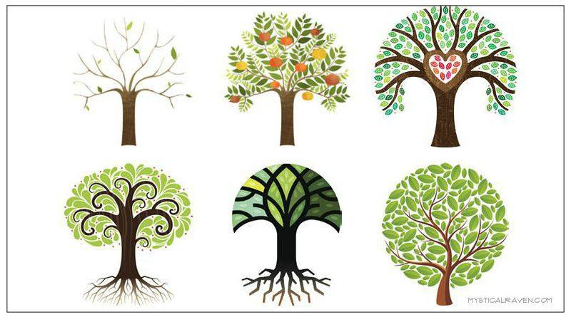 Tot welke boom voel jij je aangetrokken?