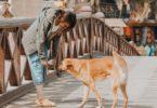 Kunnen honden slechte mensen herkennen?